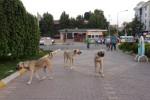 Bodrum'da şok görüntüler!
