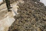 Binlerce yılanı bir çukurda topladılar ve...