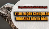 Yılın en çok konuşulan Iguana videosuna büyük ödül