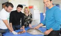 Akdeniz'de zehirli balık alarmı