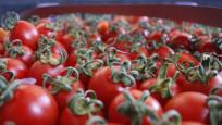 Rusya domates yasağının bitiş tarihini 1 ay öne çekti