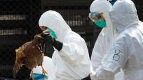 Güney Kore'de 'kuş gribi' alarmı