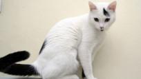 Ünlü aktivistten kayıp kedisini bulana bin TL ödül