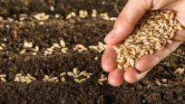 Mutlaka tüketilmesi gereken tohumlar