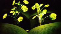 Bilim insanları ışık saçan bitki yarattı