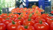 Türk domatesi Rusların cebini yakıyor