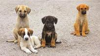 Köpekleri zehirleyene hapis