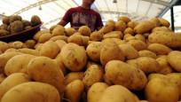Patatesin kilosu 4 TL'yi devirdi