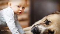 Çocukla evcil hayvan baş başa kalırsa...