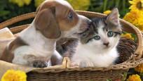 Kedi ve köpeğini sokağa atana ceza geliyor!