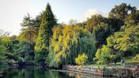 İstanbul'un en iyi ormanları