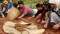 Canikli: Fındık fiyatlarına gerekirse destek yaparız