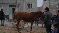 Afrin'den atılan roket Kilis'te bir ahırı vurdu