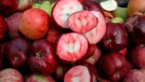 İçi ve dışı kırmızı elma tescil yolunda