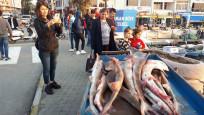 Türk balıkçıların tuttuğu köpek balıklarına Yunan talip