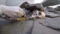 Pompeii antik kentinde bir odaya sığınan 5 kişinin iskeleti bulundu