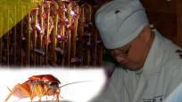 Akıl almaz iş, hamamböceği çiftliği!