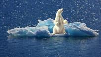 'Kuzey Kutbu tarihinin en sıcak 5 yılını geçirdi'