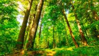 Elektronik atıklar artık orman oluyor