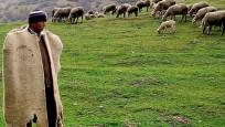 Çoban istihdamı desteği küçükbaş üretimini artıracak
