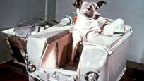 Uzaya yollanan hayvanlar ve üzücü sonları