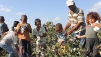 FAO'dan çocuk işçi uyarısı