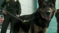 Köpeğin başına 70 bin dolar ödül kondu!