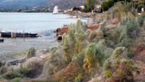 Yunanistan'da bir kasabada tüm sahil örümcek ağlarıyla kaplandı
