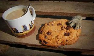 Hayvanların komik yemek halleri