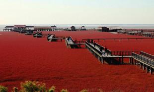 Çin'in göz alıcı güzelliği: Kırmızı Plaj