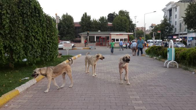 Bodrum'da şok görüntüler! Depremden 4 dakika önce…