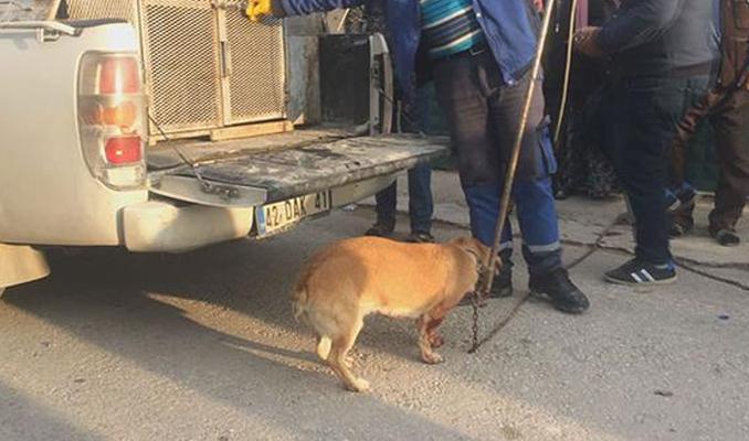 Konya'da köpek bıçakladılar