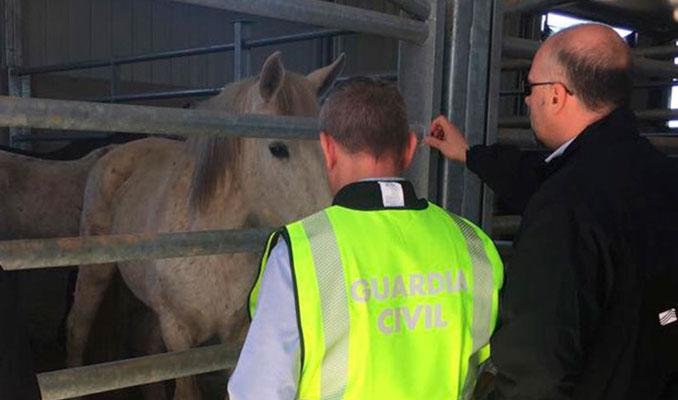 Avrupa'da at eti operasyonu: 66 tutuklama