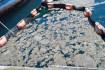 İstanbul Üniversitesi, müsilajı deniz bakteri izolatlarıyla temizlemeyi başardı