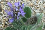 Yeni endemik bitki türü bulundu