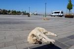 İstanbul'da meydanlar bayramda boş kaldı