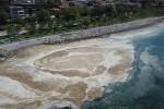TÜDAV: Deniz salyası balıkların gözlerini kapattı