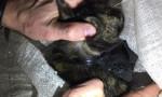 Kurye kedi yakalandı
