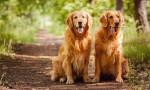 Aylık 15 bin 500 lira maaşla köpek bakıcısı aranıyor