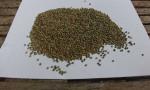 Kenevir tohumunun kilosu 1000 lira olunca üretim arttı