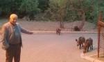 Yaban domuzları mahallede!