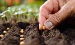 En çok tohum ithalatı Fransa'dan yapılıyor