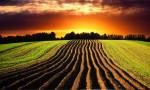 Tarımsal arazilerde satış esasları yeniden düzenlendi