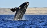 Balinalar kirli havayı temizliyor