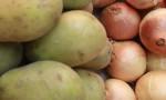 Patates ve soğana ihracat kısıtlaması