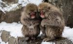Çin'de maymun deneyleri virüsle ilgili önemli bulgular ortaya koydu