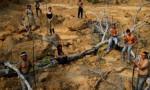 Brezilya'da ordu ormanlar için görevde