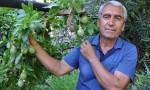 Çarkıfelek meyvelerini 100 liradan satışa çıkardı