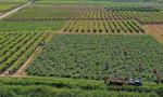 Tarımda enflasyon arttı