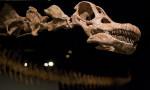 Arjantin'de bulunan titanozor şimdiye kadarki en eski örnek olabilir